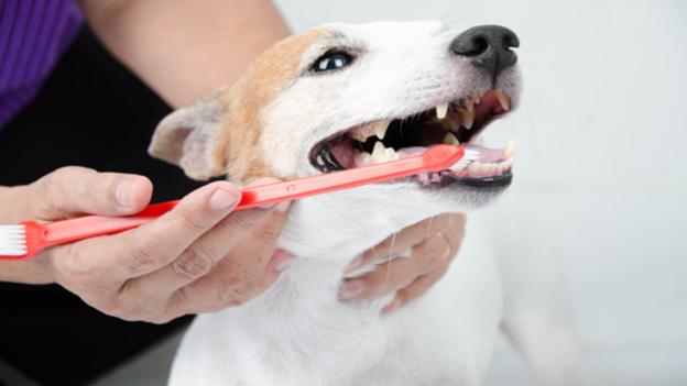 dog dental hygiene tips from belltowne veterinary center in belfair wa